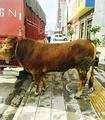 罗平九龙干锅牛肉馆