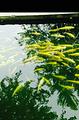 南口冷水鱼垂钓园