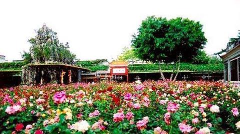 天牧玫瑰园