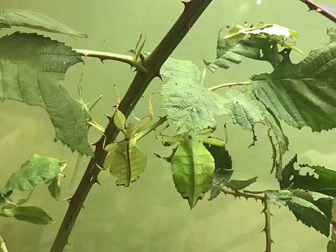 维多利亚昆虫动物园旅游景点图片