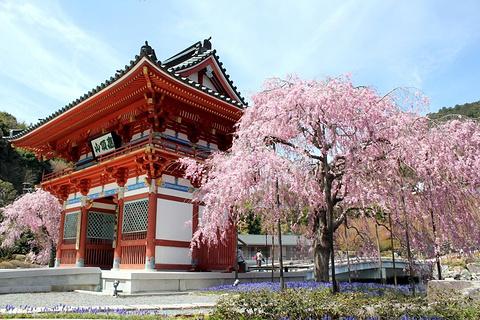 胜尾寺的图片