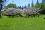 康沃尔公园