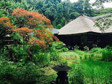 净智寺旅游景点图片