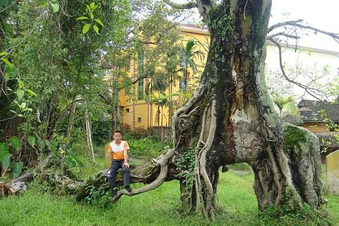 勐养象形树