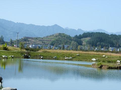 莲花村旅游景点图片