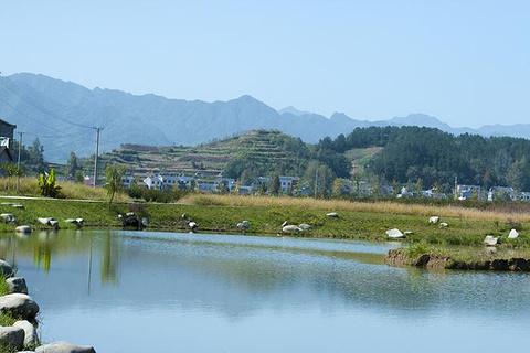 莲花村的图片