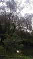 洪家山森林公园