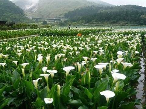 竹子湖旅游景点图片