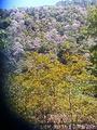 梵净山生态植物园