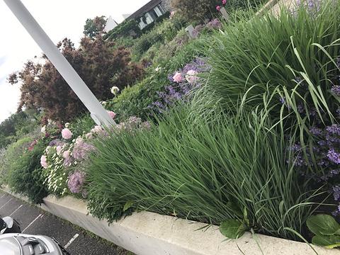 多伦多植物园的图片