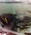 雅居乐野鱼庄