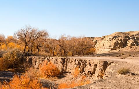 白杨河大峡谷的图片