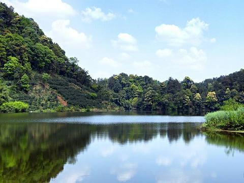 蒲江县朝阳湖白鹭生态自然保护区旅游景点图片