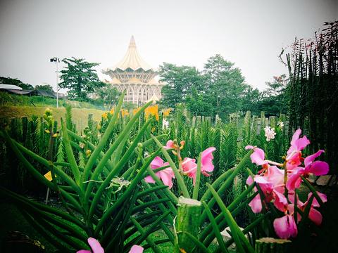 Sarawak Orchid Garden旅游景点图片