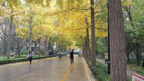 北京林业大学的图片