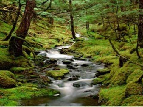 森鑫森林公园旅游景点图片