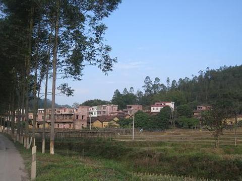 大榕村旅游景点图片