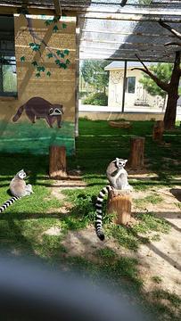 大青山野生动物园