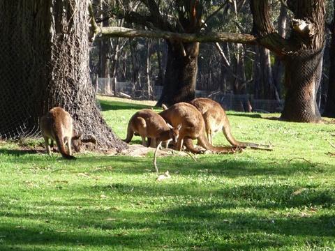 克莱兰德野生动物园