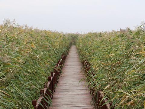 鼎翔生态旅游度假区旅游景点图片
