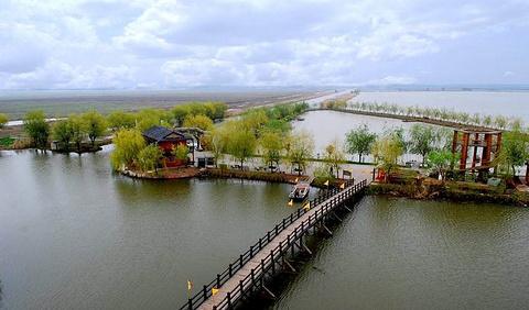 高邮湖湿地的图片