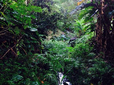 夏威夷自然中心-火奴鲁鲁旅游景点图片