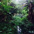 夏威夷自然中心-火奴鲁鲁