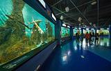 老虎滩极地海洋动物馆