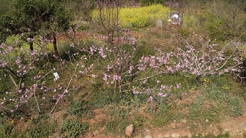 龙泉花果山风景区的图片