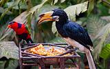 巴厘岛鸟类公园