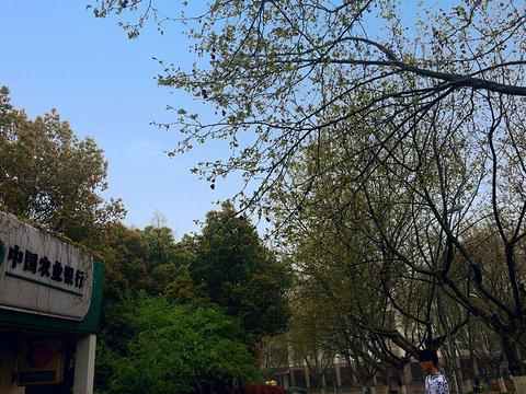 南京工业大学(江浦校区)旅游景点图片