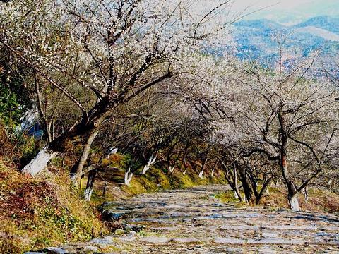 梅岭旅游景点图片