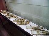 Papyrus Museum (Museo del Papiro)