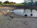 金河湾湿地植物园