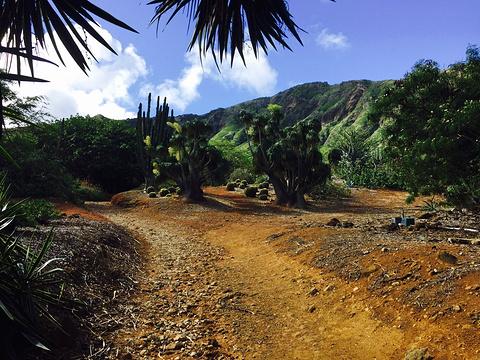 可可火山口植物园的图片