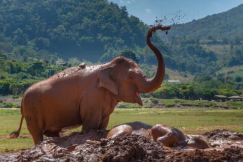 大象自然公园