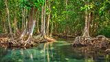 梦幻红树林