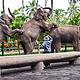 巴厘动物园