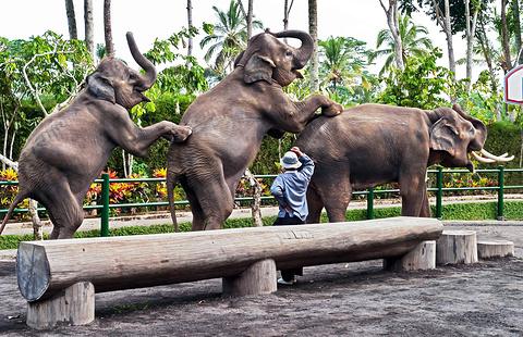 巴厘动物园的图片