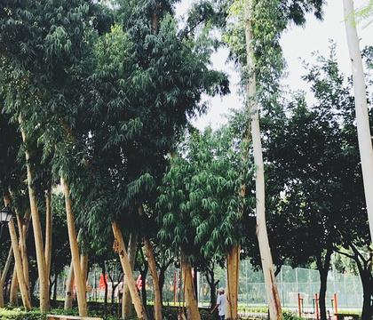 前埔健身公园