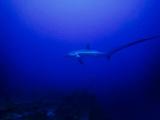 Evolution潜水中心