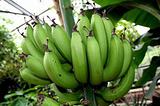 青岛亚热带植物园