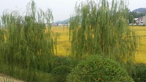 黄梅县博物馆