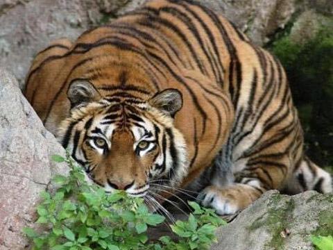 毕欧帕可野生动物园旅游景点图片