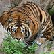 毕欧帕可野生动物园