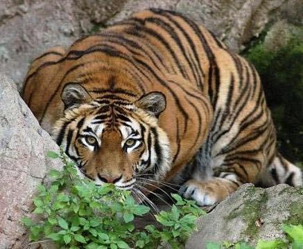 毕欧帕可野生动物园的图片