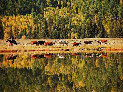 鸭泽湖旅游景点图片