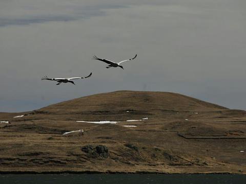 大山包黑颈鹤自然保护区旅游景点图片