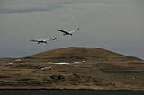 大山包黑颈鹤自然保护区