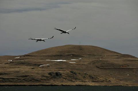 大山包黑颈鹤自然保护区的图片